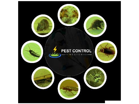 Pest Control Weston